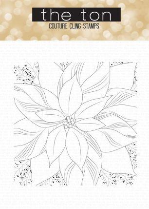 Poinsettia Close Up